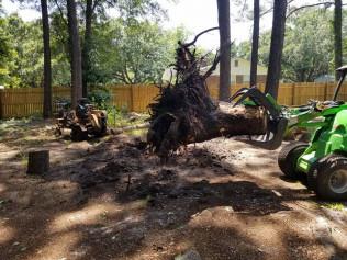 downed tree needing emergency tree removal